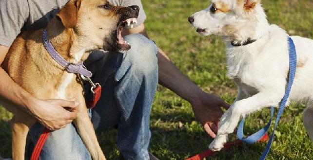 Cães sentem ciúmes?
