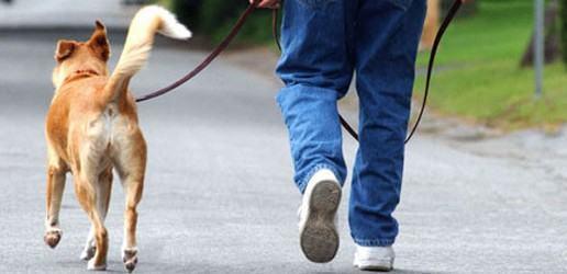 A importância de passear com o cachorro