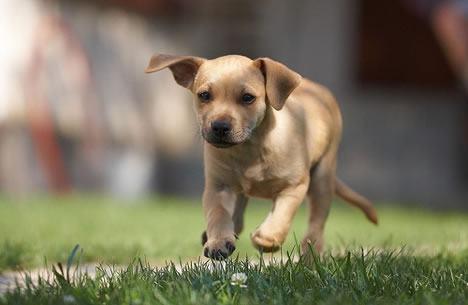 Raças de cachorro que com mais energia