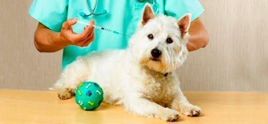 Vacinação nos cães