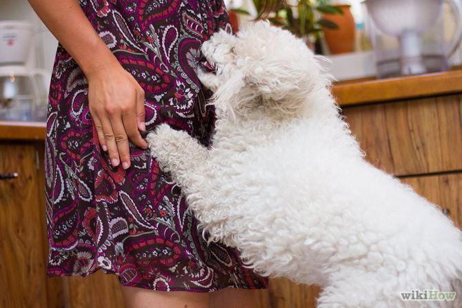 Cães pulando nas visitas - Como parar esse hábito?