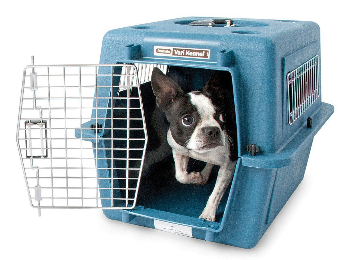 Como treinar o cão na caixa de transporte?