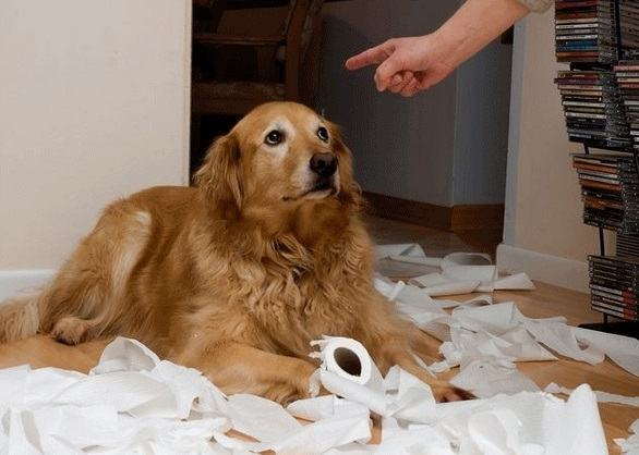 O cachorro fez algo de errado - Como devo castigar?