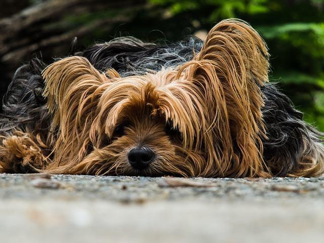 Fobias dos cachorros