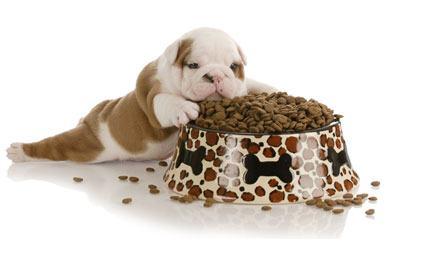 Ração terapêutica para cães