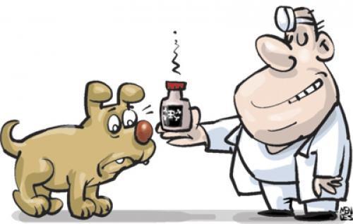 Anticoncepcional para cadelas