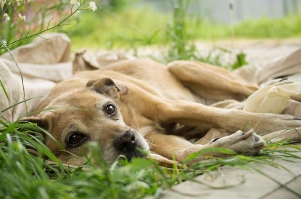 Câncer nos cachorros