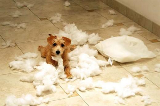 Problemas mais comuns no comportamento dos cães