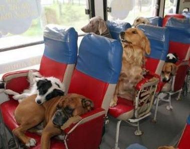 Viagem de ônibus com o cachorro