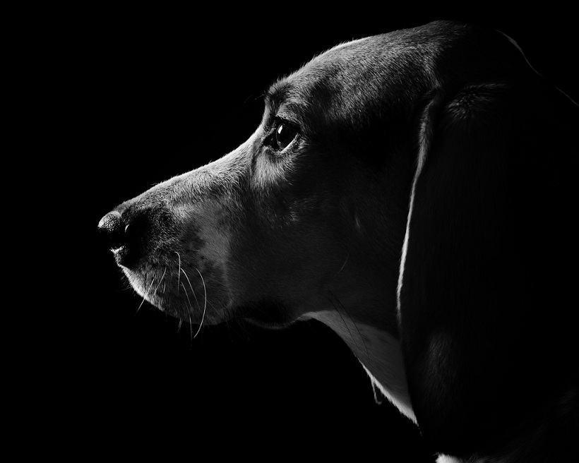 Os cachorros enxergam no escuro?