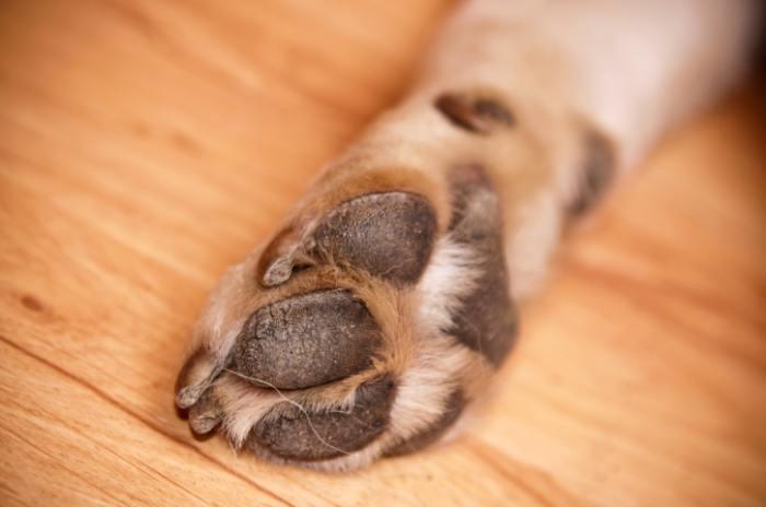 Cuidados com a pata do cachorro