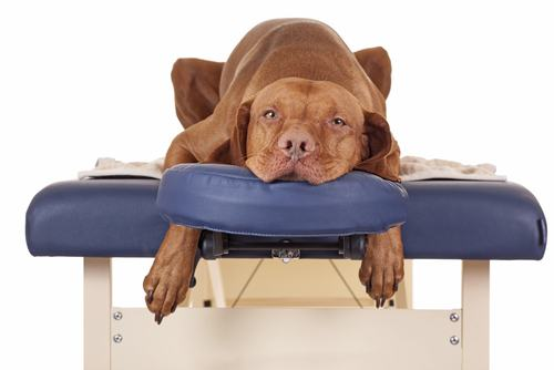Deixe seu cão relax com uma boa massagem
