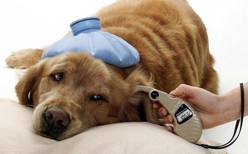 O que fazer com meu cachorro resfriado?