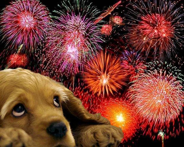Como acalmar o cão em meio a fogos de artifício
