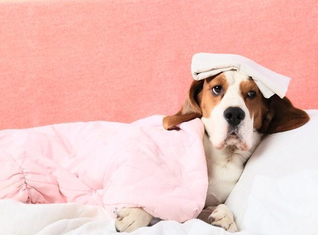 Diarreia no cachorro – O que pode ser?