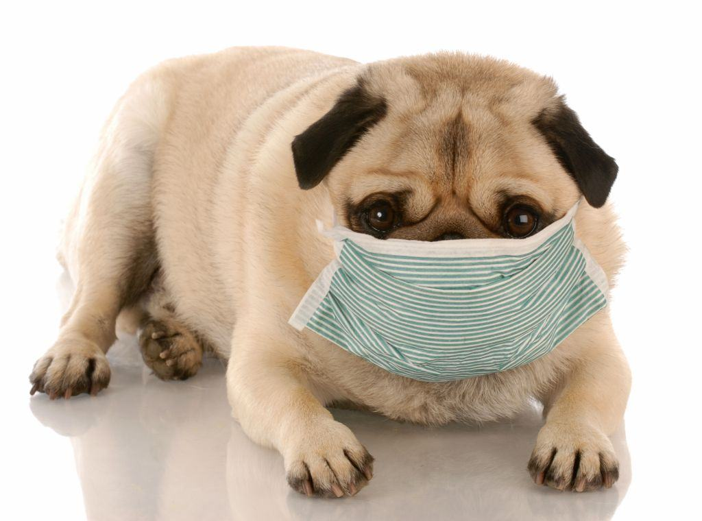 Malefícios do cigarro para seu cachorro