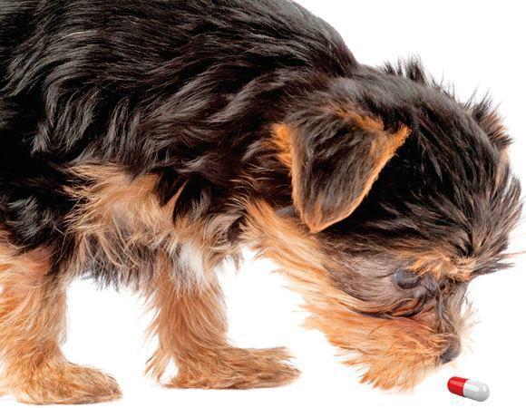 Suplementos para cães