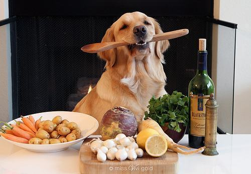 Alimentação natural para cachorros