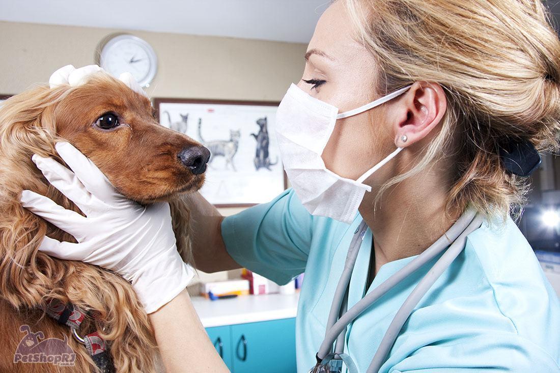 Como agir em casos de emergências veterinárias