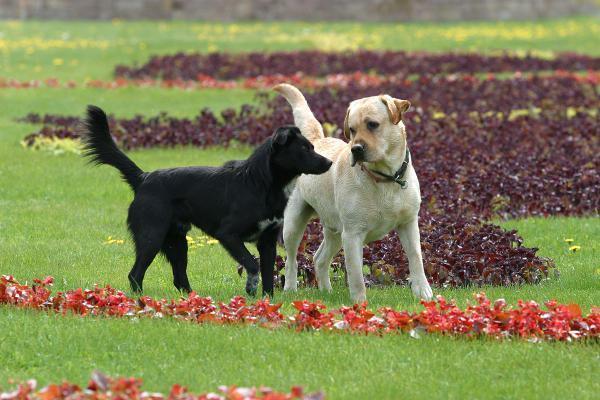Como os cachorros escolhem os cães que gostam ou odeiam?
