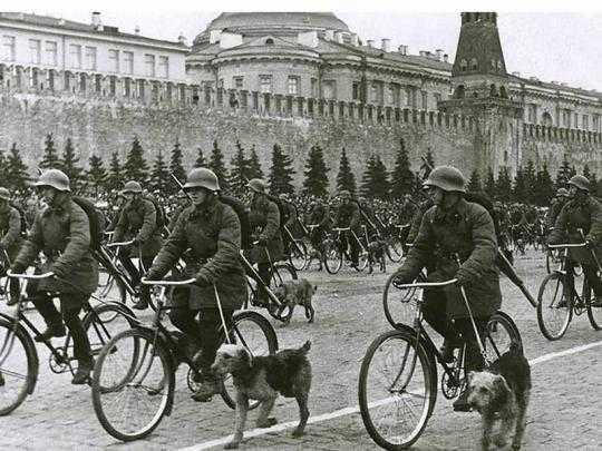 Linha do tempo – Os cães nas guerras