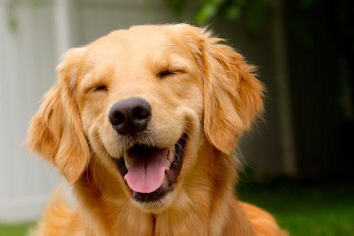 Mitos e verdades sobre os cachorros