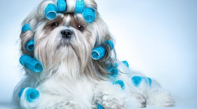 Regras para manter a pelagem do cachorro saudável