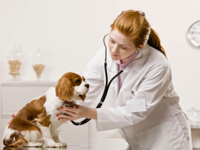 Veterinário já - Situações que pedem o doutor imediatamente