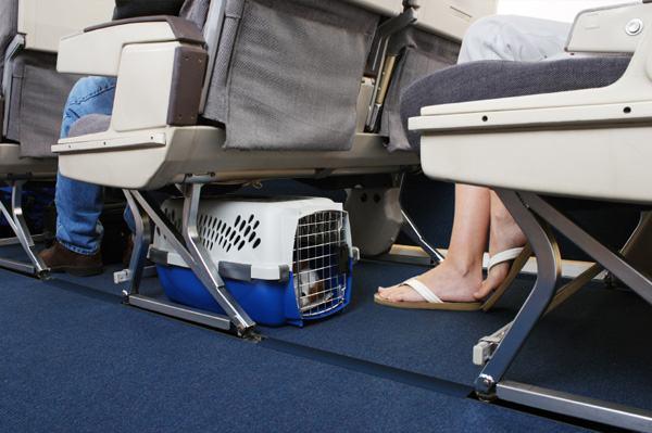Viajando com seu cachorro na cabine