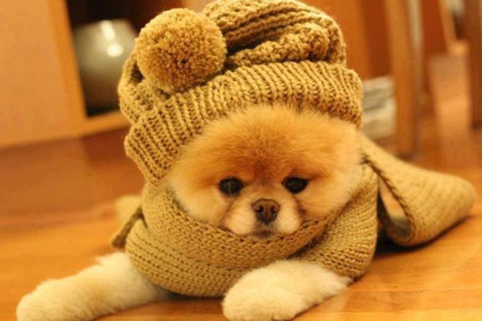 Casaquinhos para cães no inverno