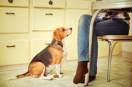 Coisas que os cães percebem nos humanos