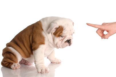 """Como ensinar o comando """"não"""" para filhotes?"""