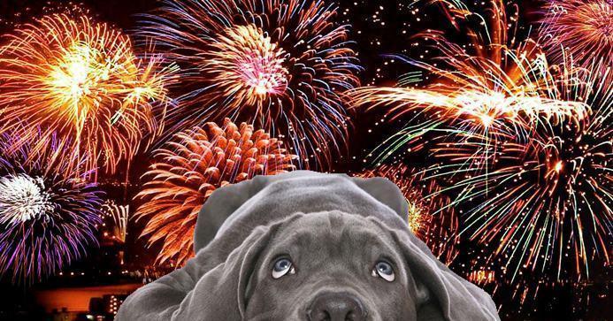 Controlando o medo de fogos de artifício