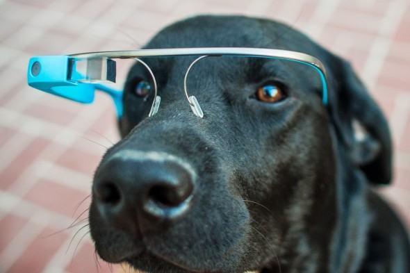 Google Glass para cães