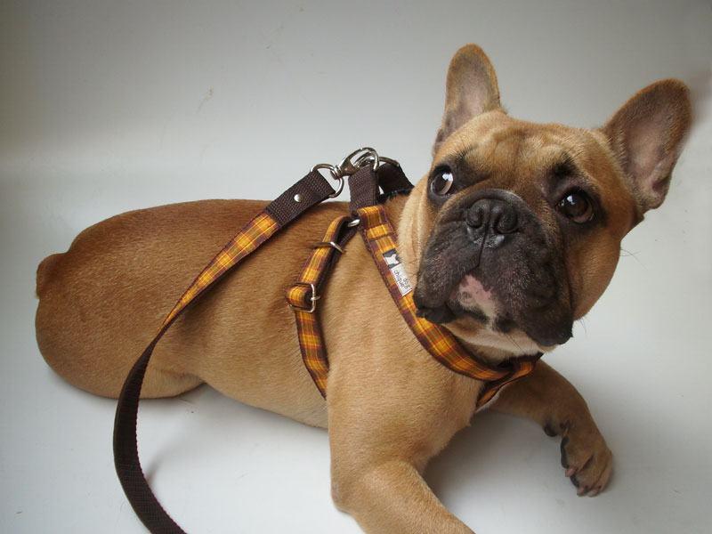Importância da coleira personalizada para cães