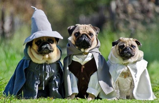Nomes ideais para cachorros de donos Geeks
