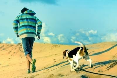 Passear solto na rua, meu cão pode?