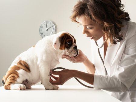 Plano de saúde para cachorros