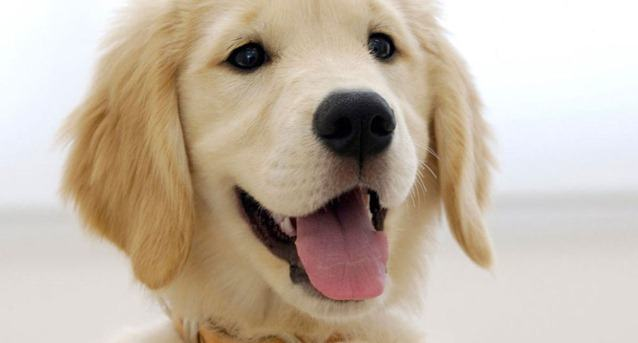 Sugestões de nomes para cadelas