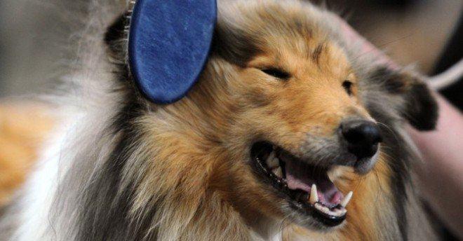 A importância da escovação dos pelos dos cães