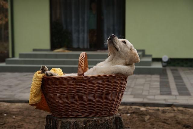 Temperatura no corpo dos cachorros varia entre os 38ºC e os 39ºC