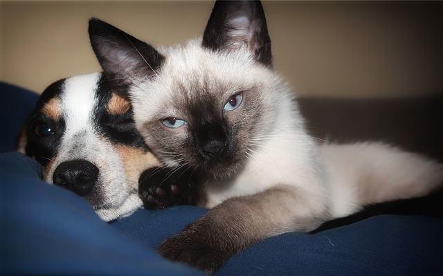 Cães e gatos podem viver juntos?