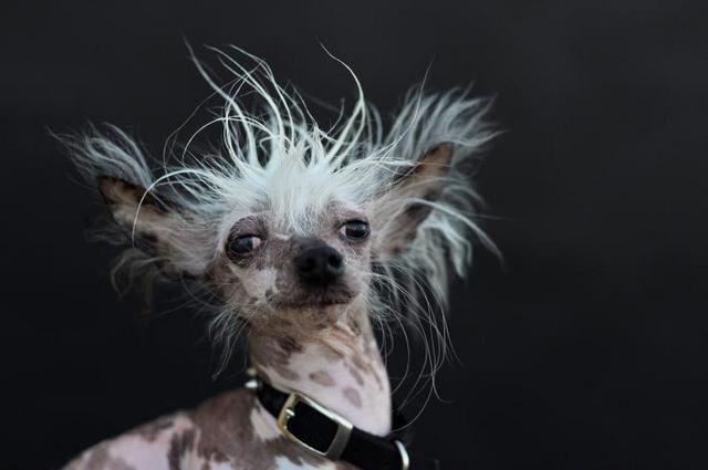 Cão Rascal