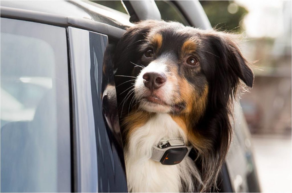 Coleira com GPS para cachorro