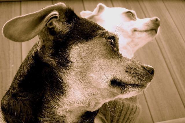 Como diminuir a queda de pelo dos cães