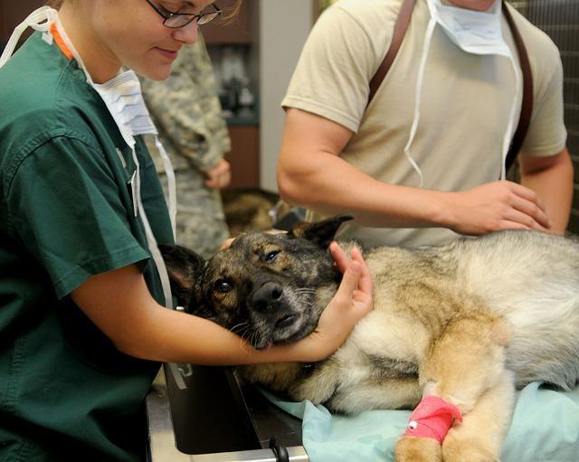 Como identificar e tratar a sarna em cachorro?