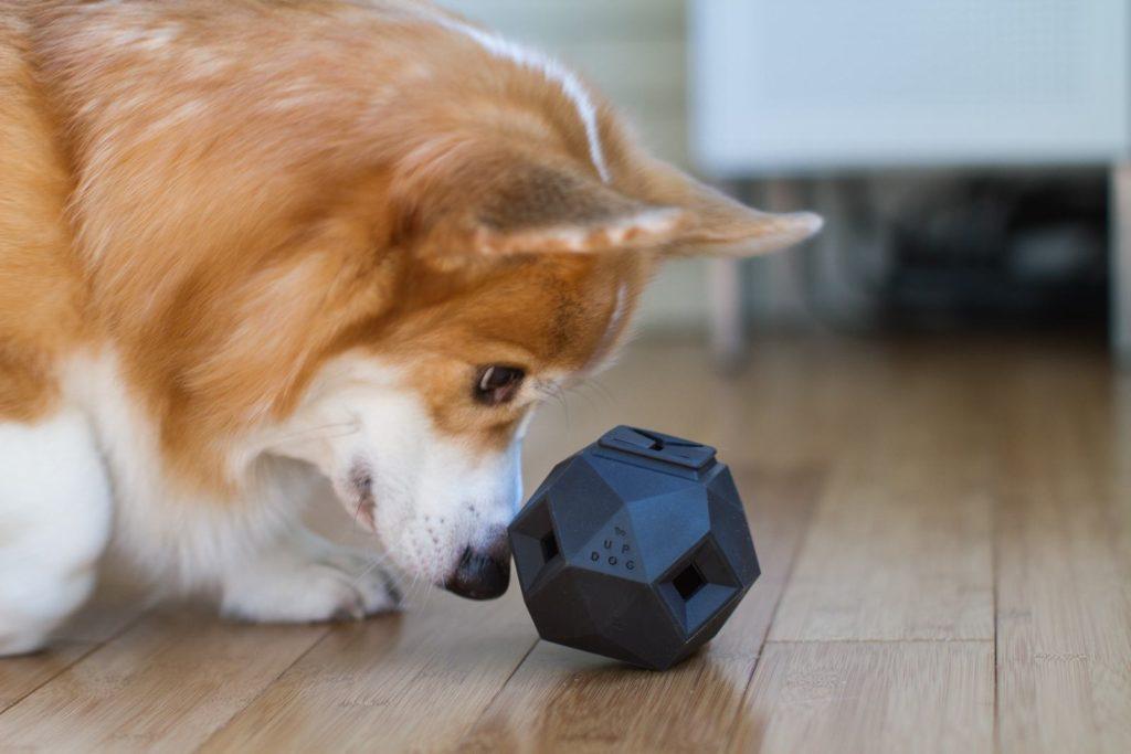 Conheça o odin: brinquedo para cachorros