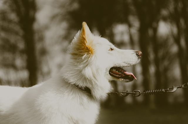 Conhecendo os cães albinos
