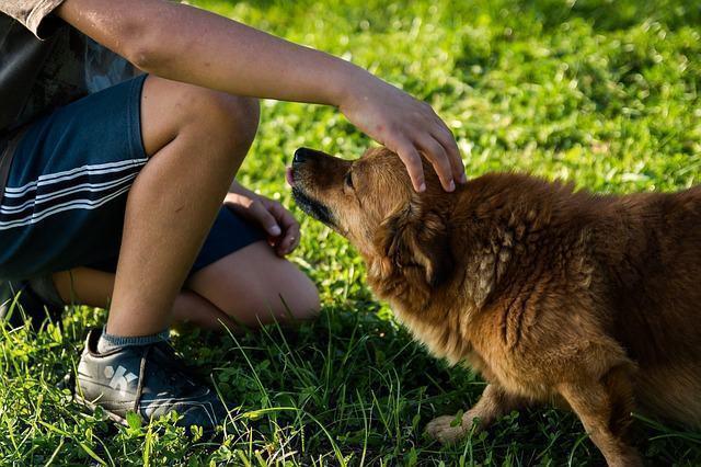 Erros comuns no adestramento de cães