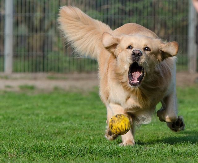 Garantindo a diversão dos cachorros em casa